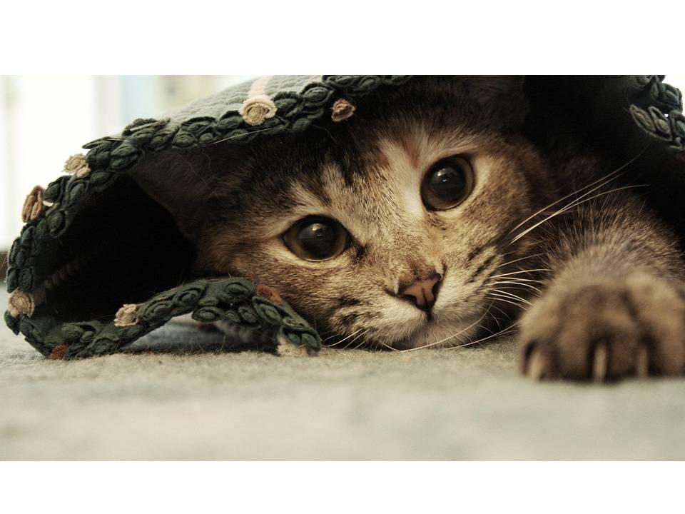¿Tu querido felino tiene problemas para orinar?