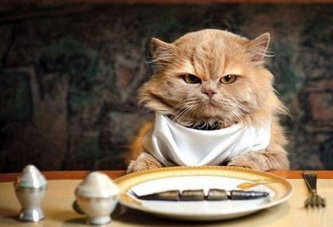 Què hi ha avui per sopar?